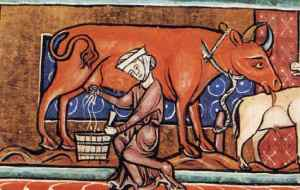 medieval cow woman