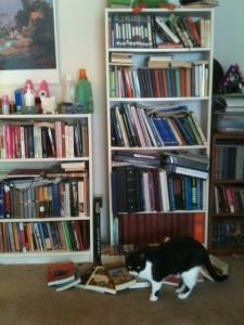 My bookshelf ... and also my cat Torpedo